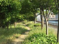 樋井川河畔緑道