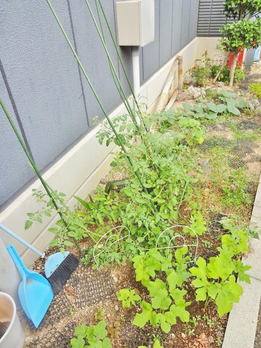 野菜 栽培