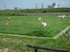 加古川河川敷緑地