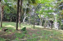 中野木緑地