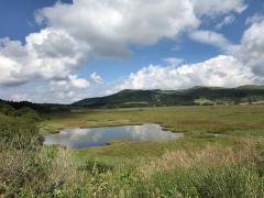 八島ケ原高層湿原