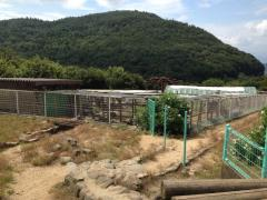 銚子渓自然動物園お猿の国