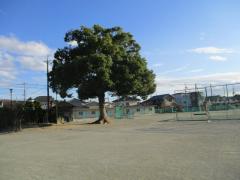 扶桑中学校
