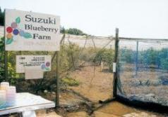 鈴木ブルーベリー農園