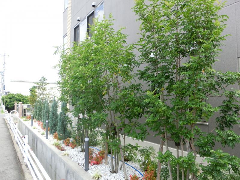 外観の植木