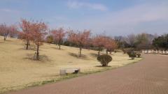 伊勢崎市いせさき市民のもり公園