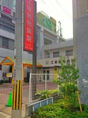 江坂動物病院