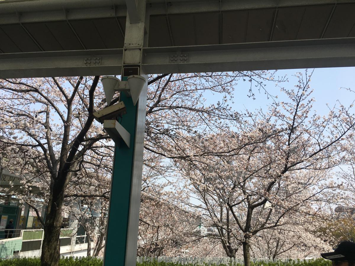 阪神競馬場_施設外観