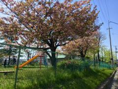 沼田近隣公園
