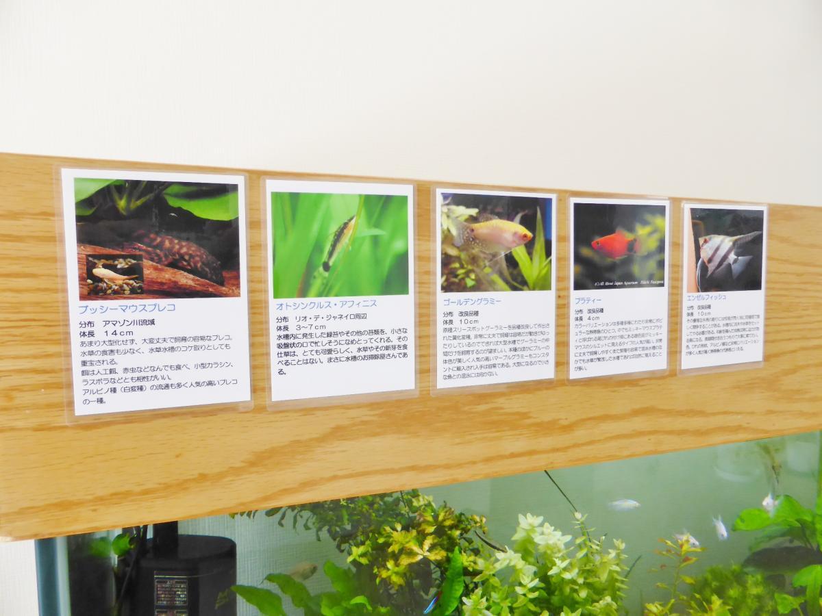 熱帯魚リスト