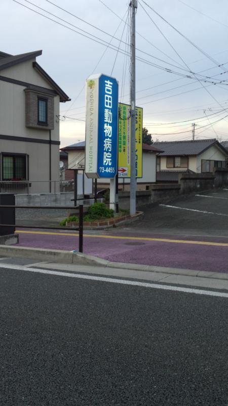 吉田動物病院_看板