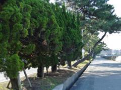 福浜9号緑地