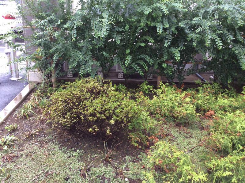 施設の撮植栽