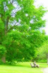 札幌市緑化植物園百合が原緑のセンター