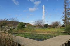 引地川親水公園湿性植物園