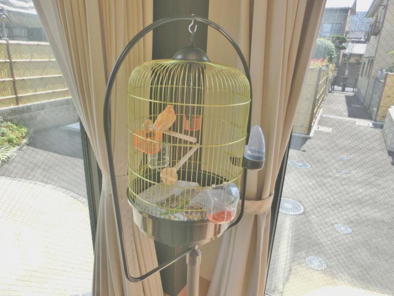 食堂にて飼われている文鳥