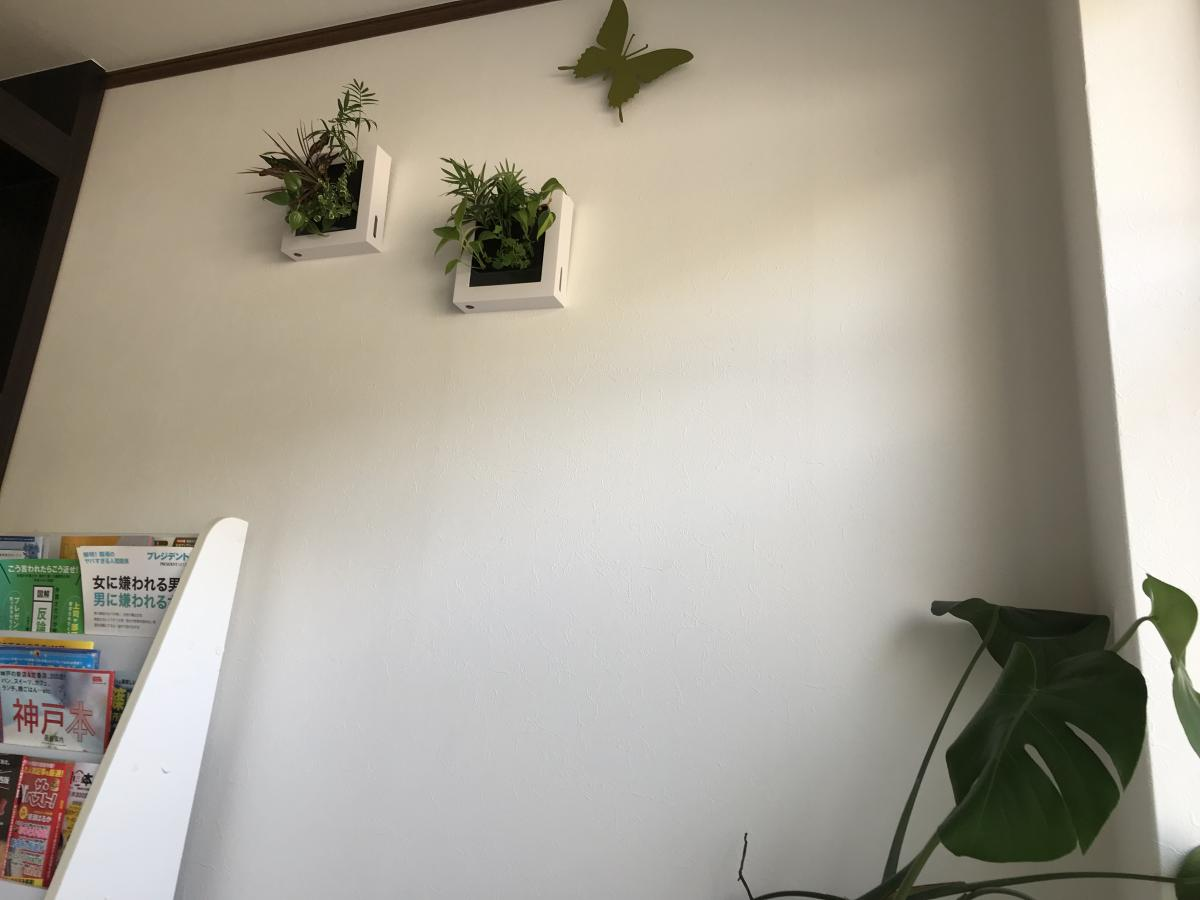 院内の植木